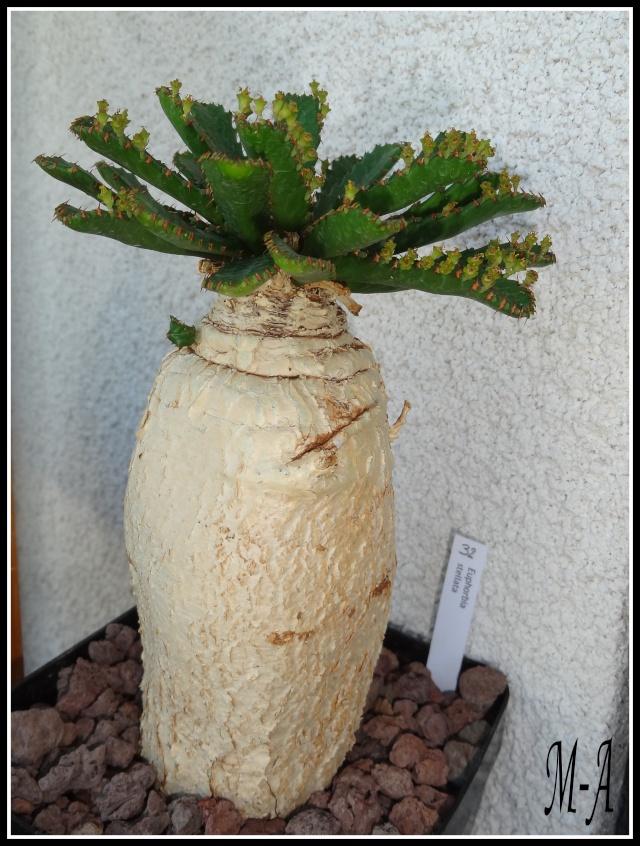 """Retour d'expo a Commentry """"couleur cactus"""" Dsc09515"""