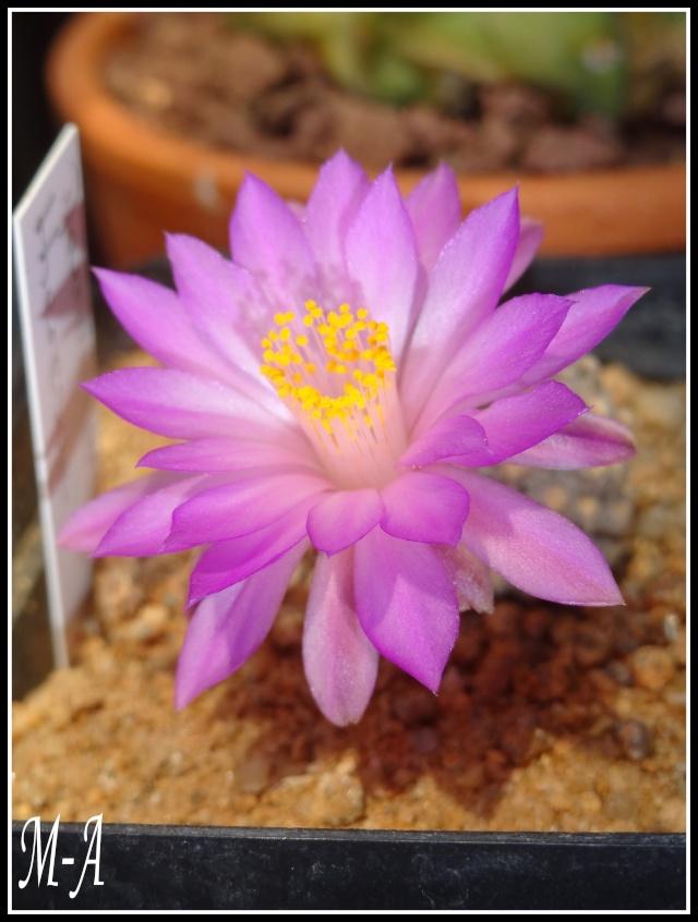 Floraison du jour Dsc09610