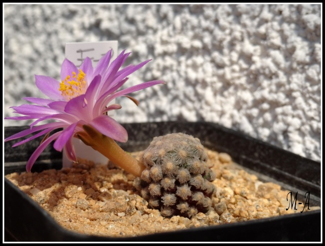 Floraison du jour Dsc09611