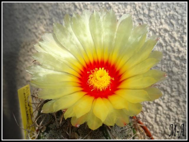 Floraison du jour Dsc09613