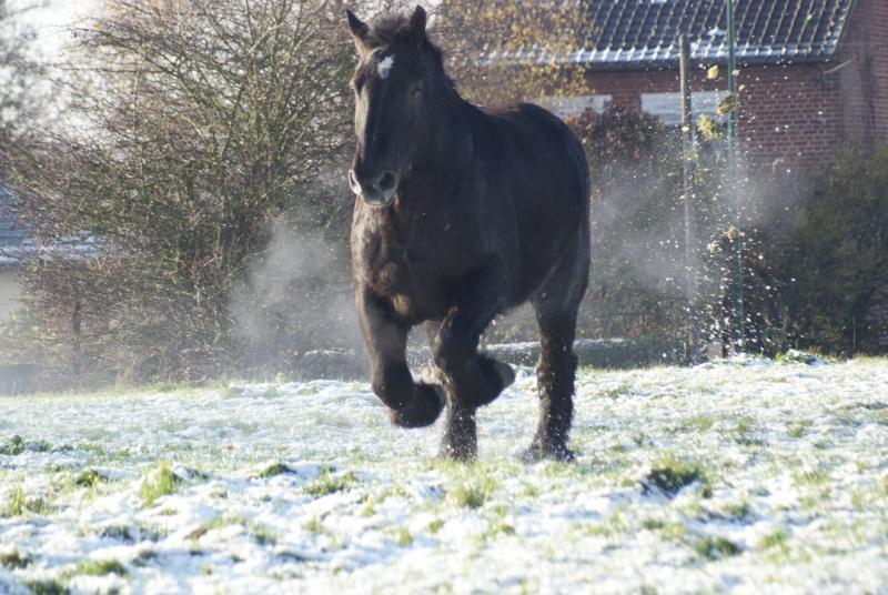 Thème de Décembre : le cheval et la neige  - Page 2 Dsc01311