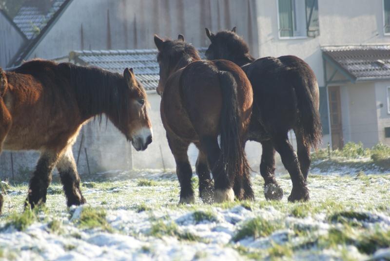 Thème de Décembre : le cheval et la neige  - Page 2 Dsc01313