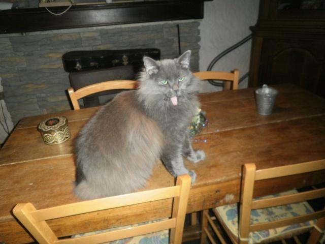 Toulouse chaton gris de 3 mois. - Page 3 Photo_11