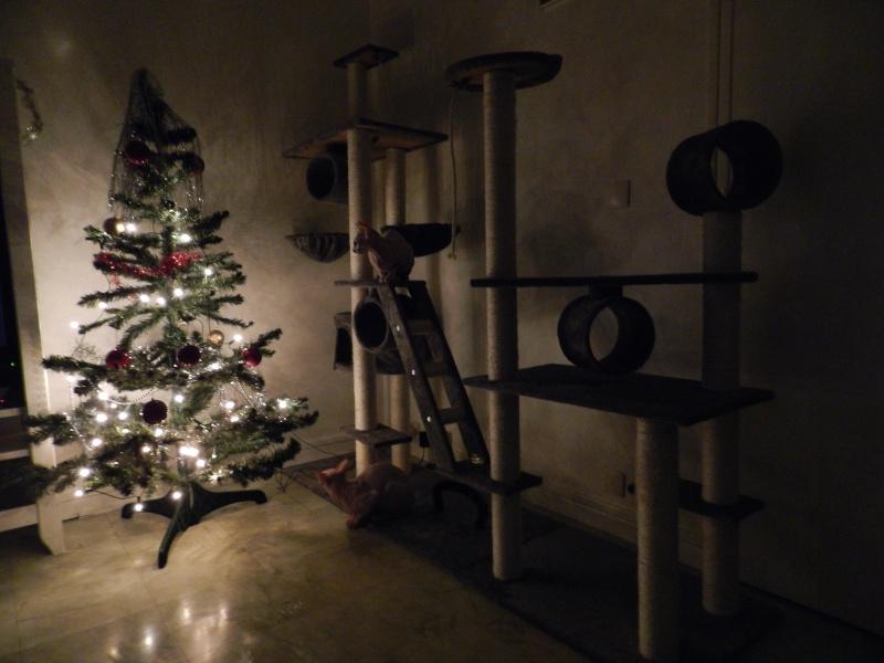 C'est Noël et... Dscn0411