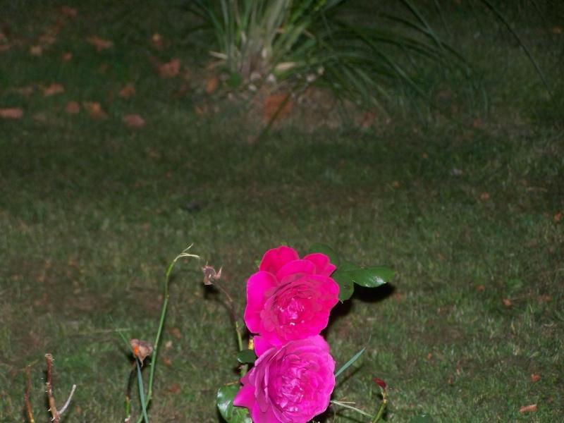 Fleurs du soir 102_3716