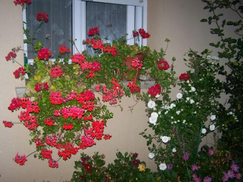 Fleurs du soir 102_3718