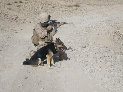 Animaux soldats - Page 2 Random86