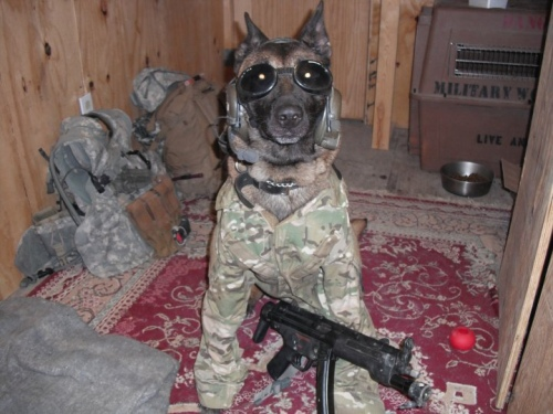 Animaux soldats - Page 2 Random87