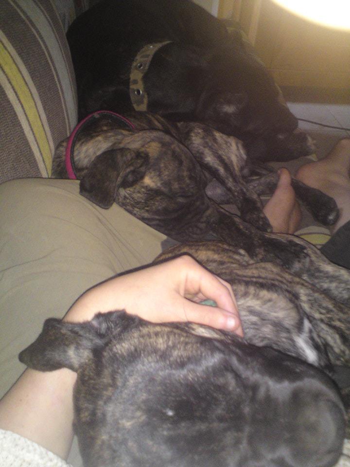 Où votre chien dort-il? - Page 2 36636_11