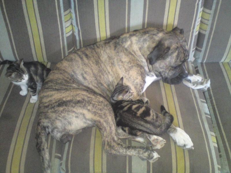 Où votre chien dort-il? - Page 2 39153810