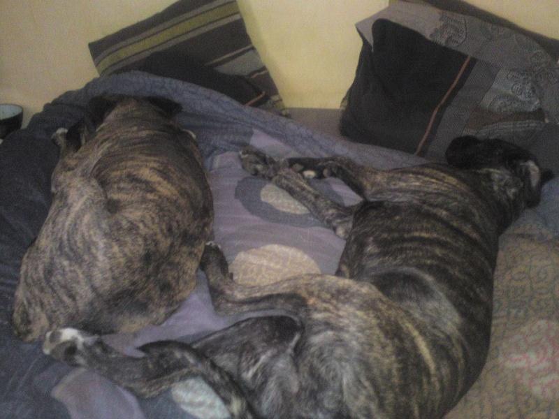 Où votre chien dort-il? - Page 2 42343910