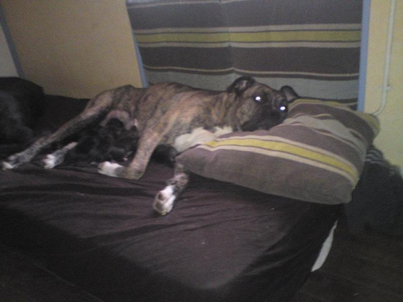 Où votre chien dort-il? - Page 2 42588910