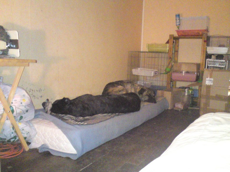 Où votre chien dort-il? - Page 2 42774111