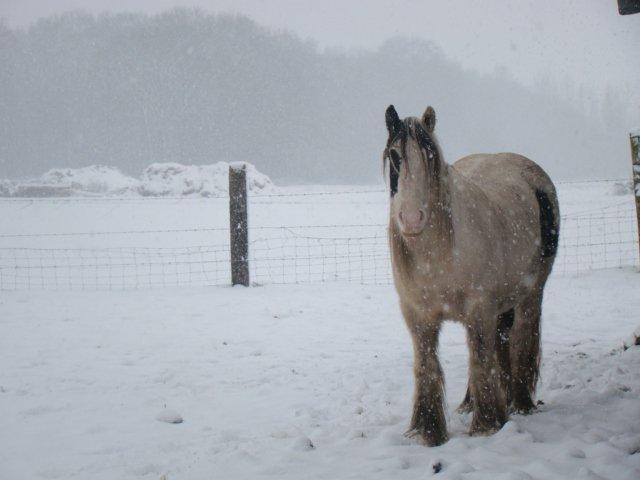 Concours Photos Décembre : Le Cheval et la Neige 72047_10