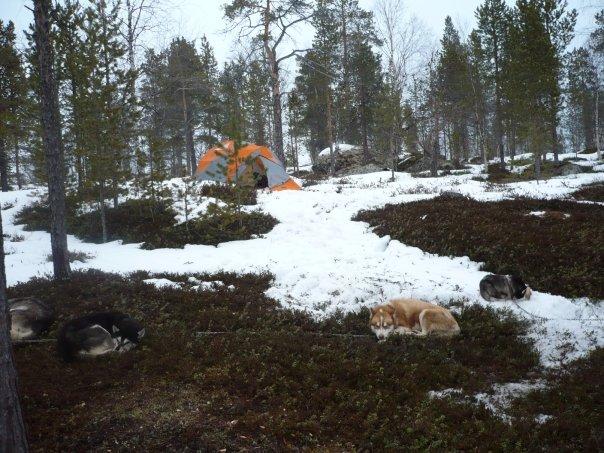 Quelques photos Laponie Finlandaise 5768_110