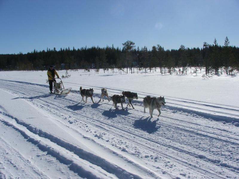 Quelques photos Laponie Finlandaise Fxcd0012