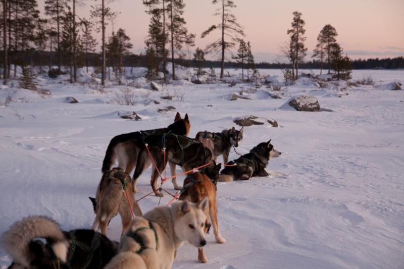Quelques photos Laponie Finlandaise Img_5210