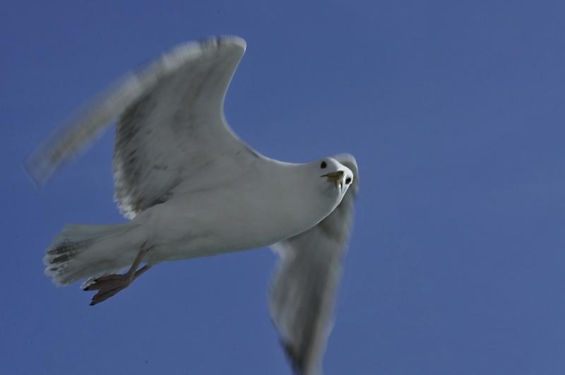 Oiseaux des mers _dsc3812