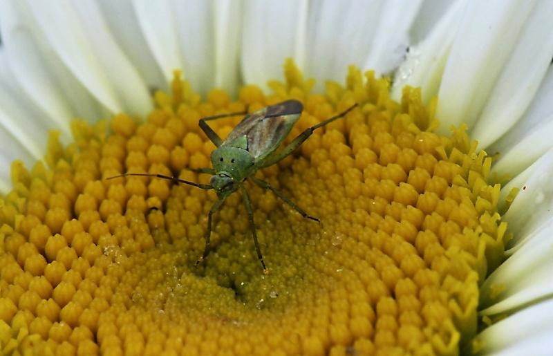Différents insectes _dsc5013