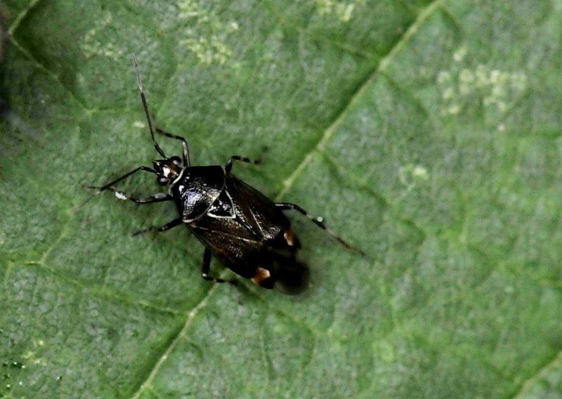Différents insectes _dsc5113