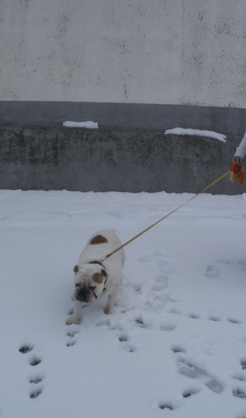 Un dia de Nieve Gedc1118