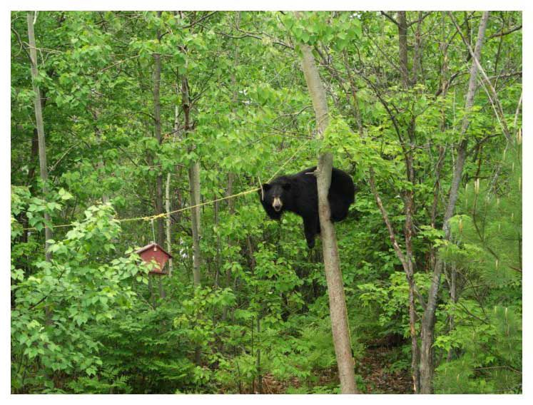 Bears are pretty cool Bear_o10