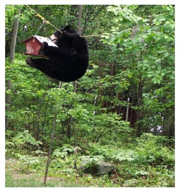 Bears are pretty cool Bear_o13