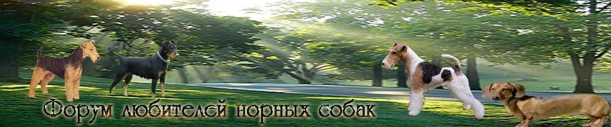 Русский охотничий спаниель Hsbfek10