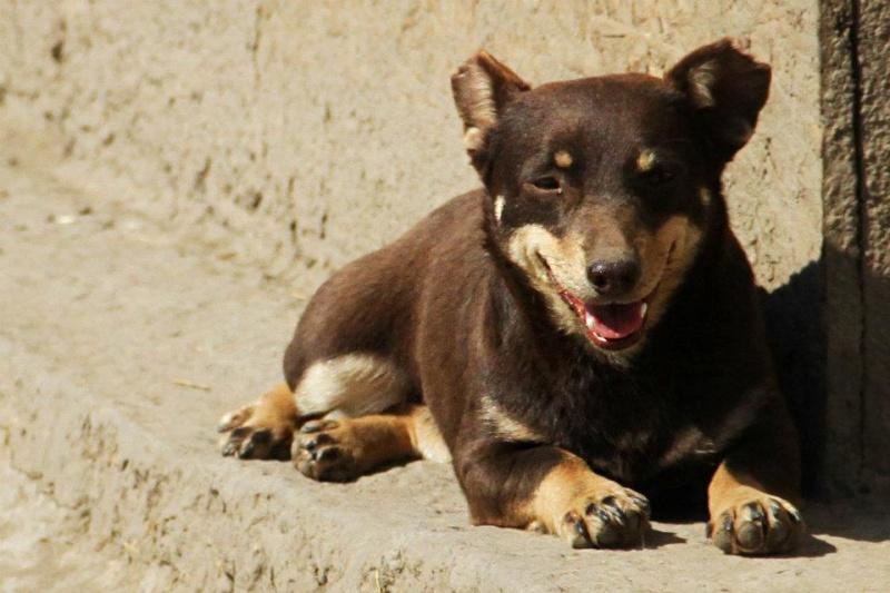 Poucette, femelle x pinscher de 19 mois, oreilles mutilées (Serbie) - Page 2 30600210