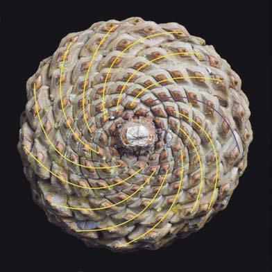 Images de mathématiques Ananas10