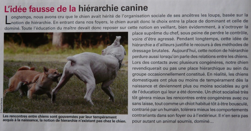 Une hiérarchie de dominance chez le chien? - Page 4 P1060910