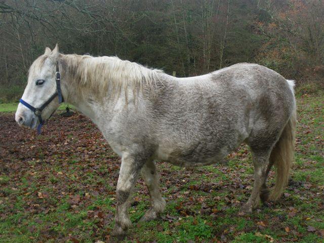 ALTESSE - Connemara née en 1988 - adoptée en mars 2009 par Prinova 61_alt10
