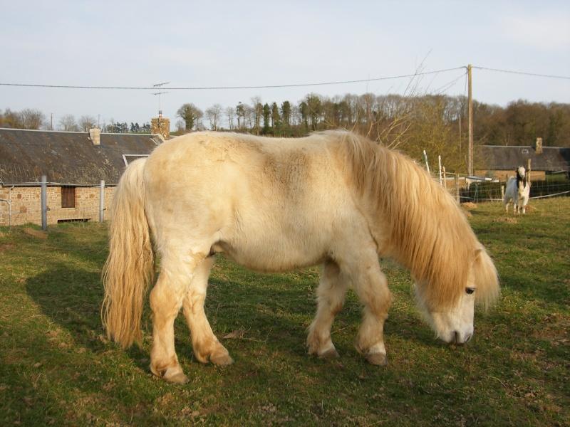 PETIT PRINCE - ONC Poney Typé Shetland né en 1993 - adopté en mai 2009 par Camille - DCD le 04.04.2018 Dscf0110