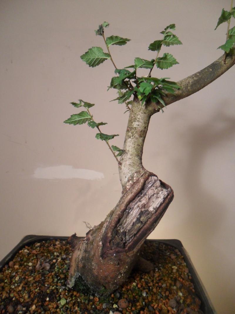 Collected Wild Cherry, Wild Rose, Honeysuckle, Hawthorn & Elm Sam_2420