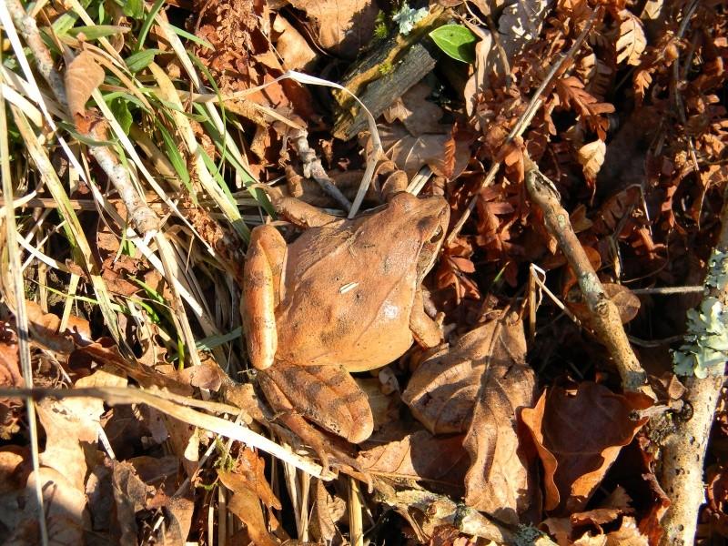 grenouille rose? Dscn7411