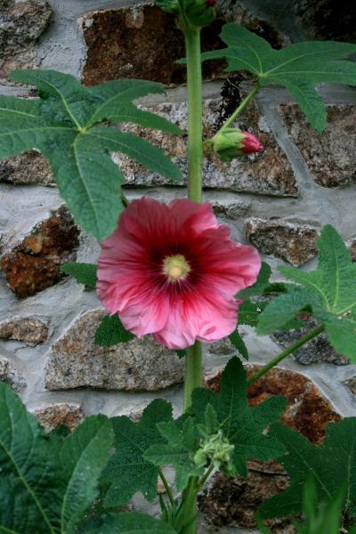 Floraisons du mois de juillet Img_0211