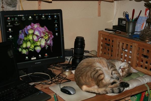 Au royaume des chats Img_0217