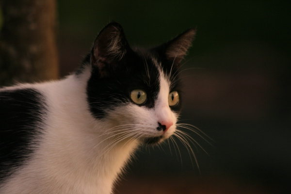 Au royaume des chats Img_0510