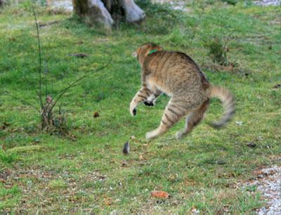 Au royaume des chats Img_5610