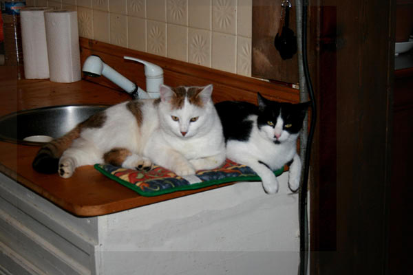 Au royaume des chats Img_8010