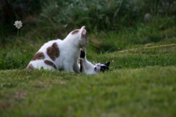 Au royaume des chats Normal18