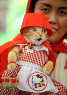 Pauvre chat-peron rouge de honte 42578111
