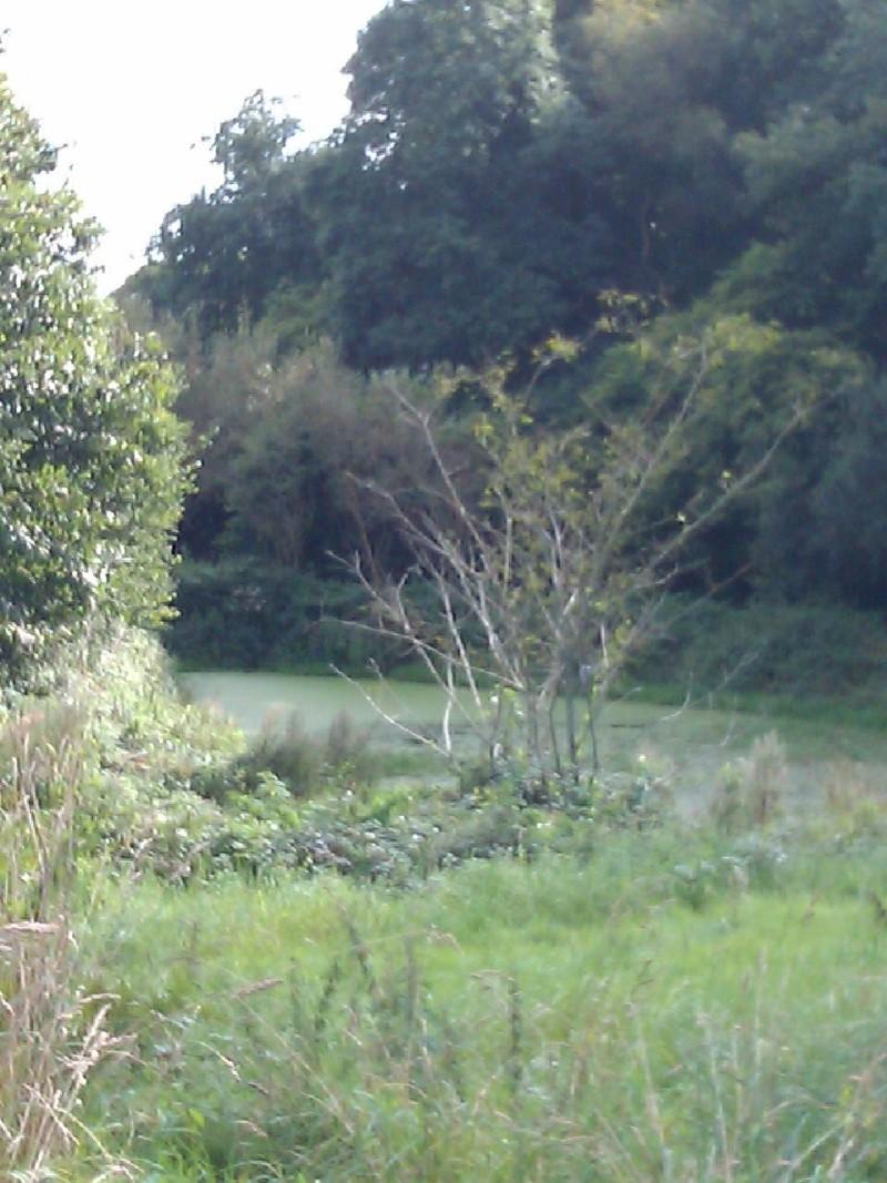 Jolie lac ou etang Imag0212