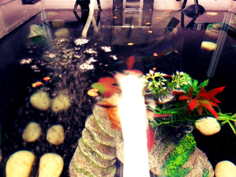 mon aquarium  L10