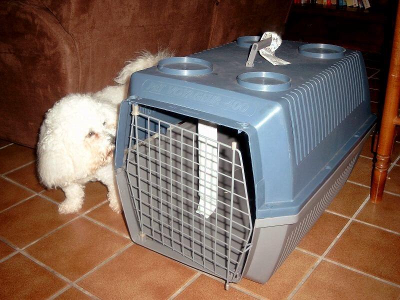 caisse transport speciale terrier Cage-v10