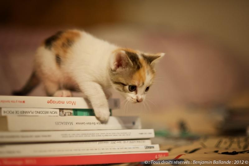 Plus que quelques jours avant l'arrivée des chatons - Page 2 70956910