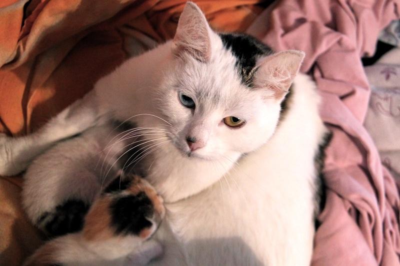Plus que quelques jours avant l'arrivée des chatons - Page 2 Ikea_e11
