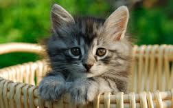 amis des bêtes, cliquez pour les animaux ! clicanimaux…  Images30
