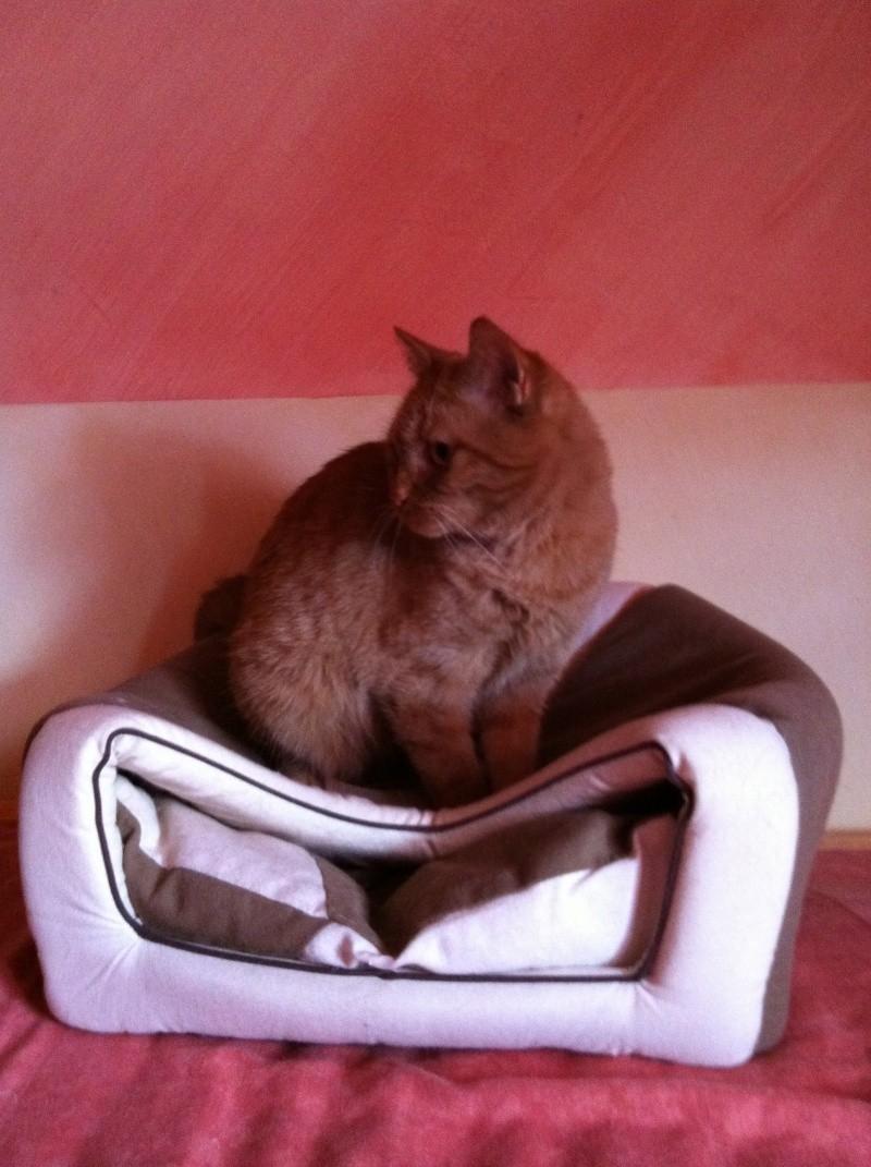 FARANDOLE - Femelle tigrée rousse de 1 an Img_0417
