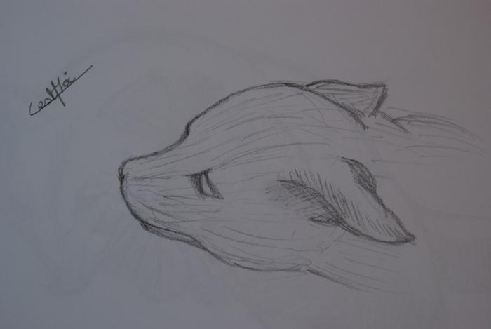 Mes dessins et autres ( Cestmoi ) Chat_a10
